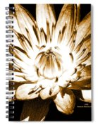 Brown Beauty Spiral Notebook