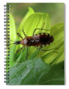 Brown Insect Spiral Notebook