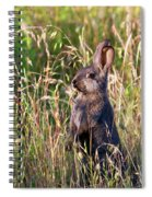 Brown Bunny Spiral Notebook