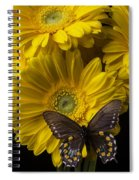 Brown Butterfly On Yellow Daisies  Spiral Notebook