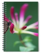 Brown Butterfly Resting On The Pink Plant Spiral Notebook