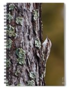 Brown Creeper Spiral Notebook
