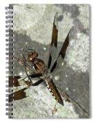 Brown Dragonfly  Spiral Notebook