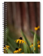 Brown Eed Susans By Red Bard Spiral Notebook