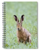 Brown Hare Spiral Notebook