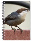 Brown-headed Nuthatch Spiral Notebook