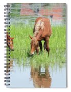 Brown Horse And Foal Nature Spring Scene Spiral Notebook