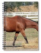 Brown Horse Eating Hay Ranch Scene Spiral Notebook