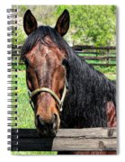 Brown Horse In A Corral Spiral Notebook