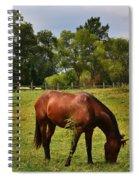 Brown Horse In Holland Spiral Notebook
