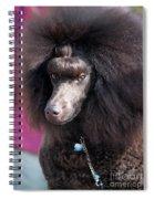 Brown Medium Poodle Spiral Notebook