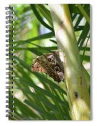 Brown Morpho Butterfly Resting On A Sunny Tree  Spiral Notebook