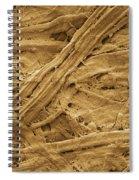 Brown Paper Towel Spiral Notebook
