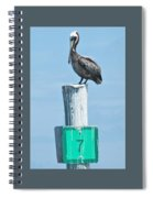 Brown Pelican On Marker 7 Spiral Notebook
