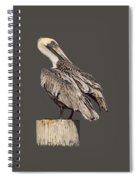 Brown Pelican - Preening - Transparent Spiral Notebook