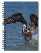 Brown Pelican Taking Off Spiral Notebook