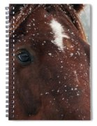 Brown Snow Horse Spiral Notebook