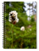 Brown Spruce Longhorn Beetle Spiral Notebook
