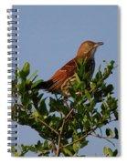 Brown Thrasher Spiral Notebook