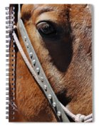 Bryce Canyon Horse Portrait Spiral Notebook