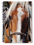 Bryce Canyon Horseback Ride Spiral Notebook