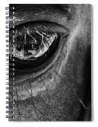 Bryce Canyon National Park Horse Bw Spiral Notebook