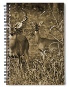 Buck And Doe In Sepia Spiral Notebook