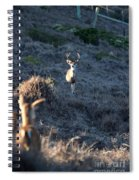 Buck And Does Spiral Notebook