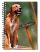 Buck Spiral Notebook