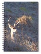 Buck Spiral Notebook