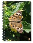 Buckeye At Caumsett Spiral Notebook