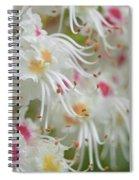 Ohio Buckeye Blooms Spiral Notebook