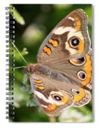 Buckeye Butterfly Square Spiral Notebook