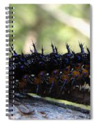 Buckeye Caterpillar Spiral Notebook
