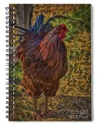 Buckeye In The Barnyard Spiral Notebook
