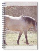 Buckskin Horse  Spiral Notebook