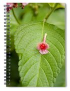 Bud Spiral Notebook