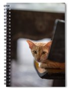 Buddhist Temple Cat Spiral Notebook