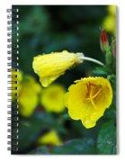 Budding Friends - Missouri Primrose Spiral Notebook