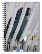 Budgerigar Spiral Notebook