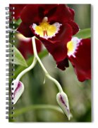 Buds And Blooms Orchid Spiral Notebook