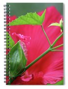 Buds Before Blooms Spiral Notebook