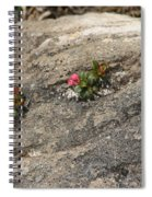 Buds Of Beauty Within Harshness Spiral Notebook