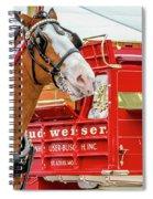 Budweiser Clydesdale In Full Dress Spiral Notebook