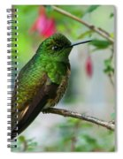 Buff-tailed Coronet Spiral Notebook
