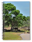 Buffalo At Hambantota Spiral Notebook