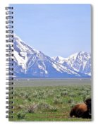 Buffalo At Rest Spiral Notebook