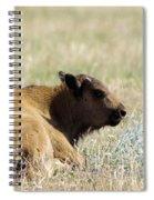 Buffalo Calf Spiral Notebook