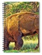 Buffalo Custer State Park  Spiral Notebook
