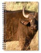 Buffalo Encounter Spiral Notebook